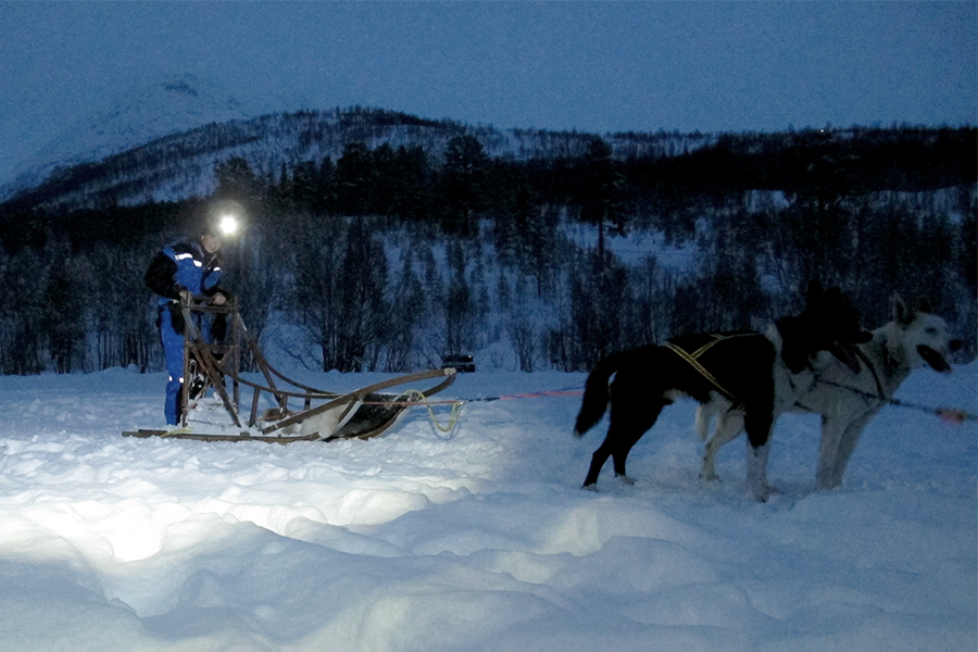 Corsa con i cani da slitta - Caccia all'Aurora Boreale in Norvegia