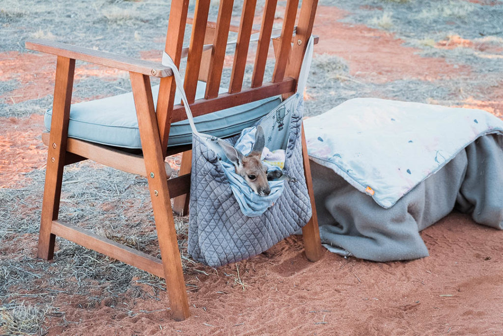 canguro a Kangaroo Sanctuary